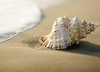 Capture Coastal Comforts at Home