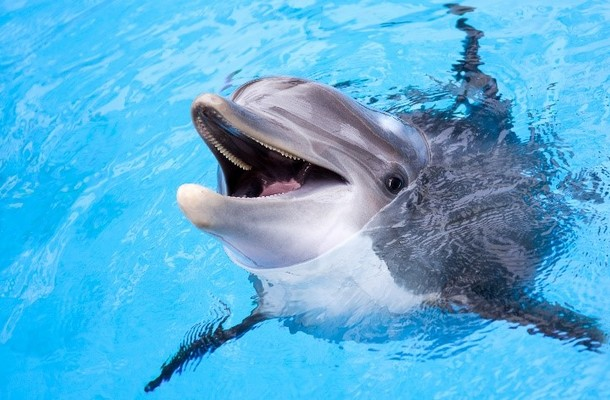 Monterey's Must-Dos for Dolphins
