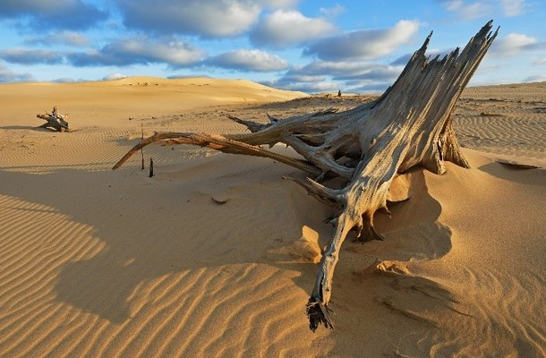 Michigan's Silver Lake Sand Dunes: A Desert Delight at the Heart of the Great Lakes