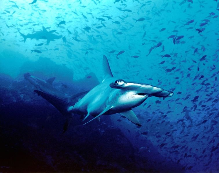 10 Incredible Sharks