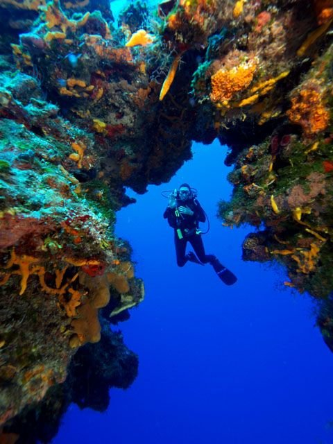 10 Captivating Reefs