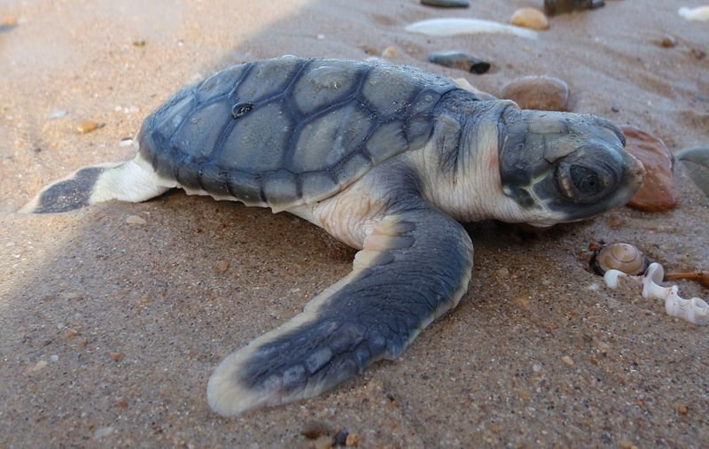 It's Sea Turtle Season!