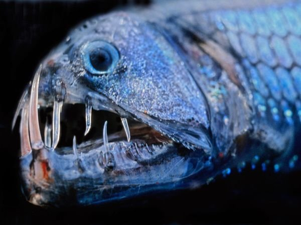 Frightening Fish
