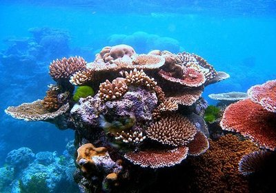 Coral Reef Formation