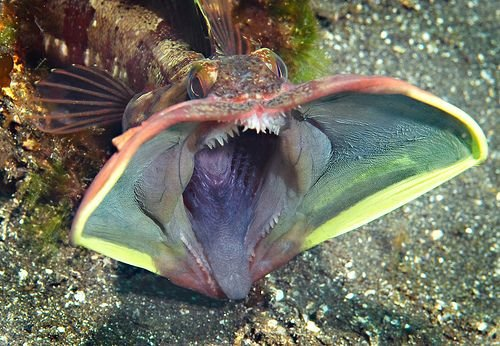 The Strangest Fish in the Sea