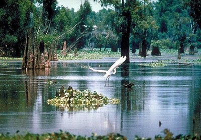 Boating in Louisiana!