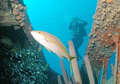 Diving at the Hilma Hooker