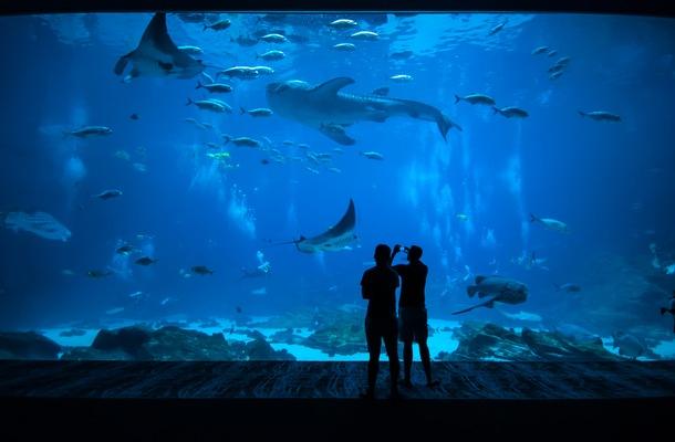 5 Fun Ways To Celebrate National Aquarium Month With Monterey