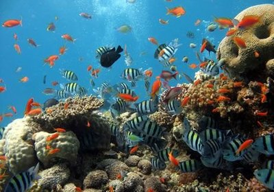 Colorful Reefs Around the World