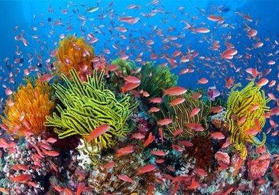 Snorkeling 'Down Under'