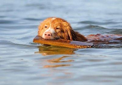 Raising Man's Best Friend on the Water