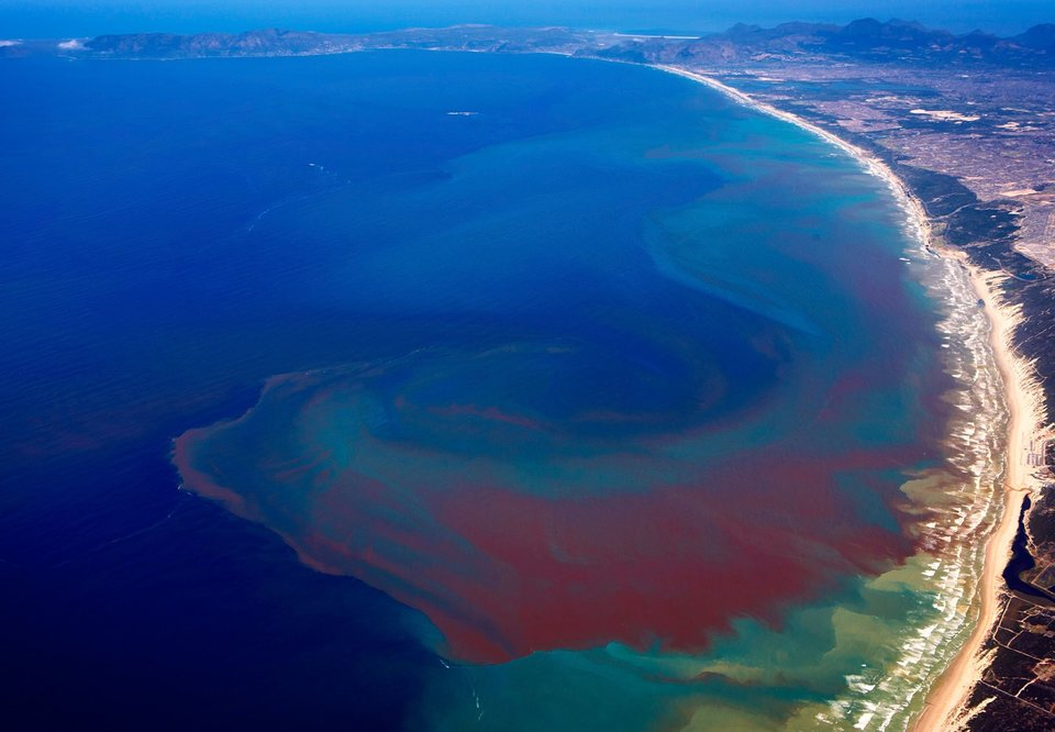 What's Behind a Red Tide?