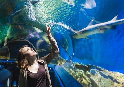 Zoo & Aquarium Month: Innovative Aquariums Around The World