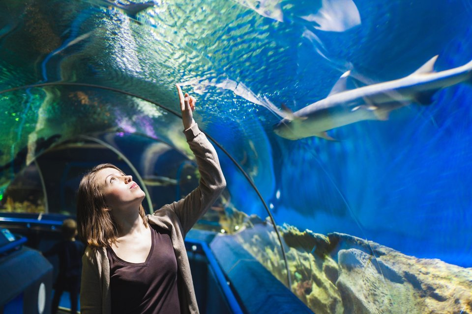 Zoo & Aquarium Month: Innovative Aquariums Around The World