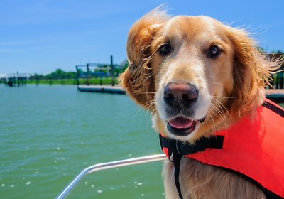 Boating with Pets: All Paws on Deck!