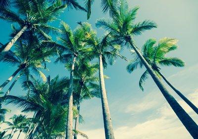 A Traveler's Look at Cabbage Key, Florida