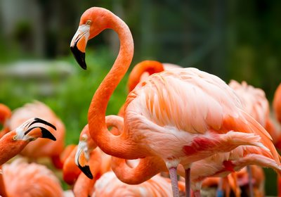 Spring Travel Guide: All About Flamingos