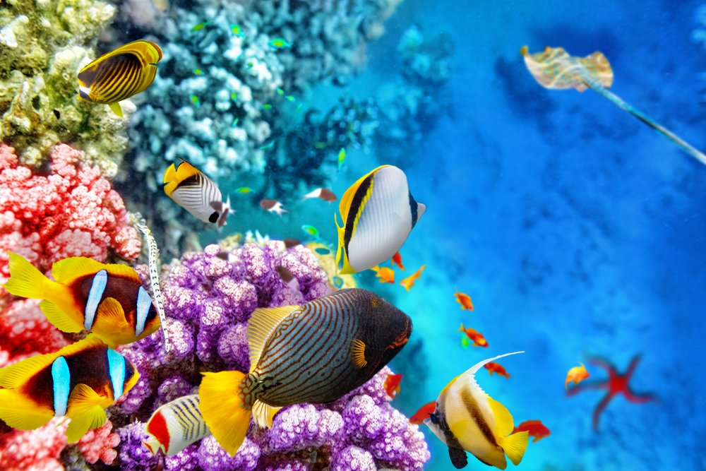 The Great Barrier Reef: A Natural Marvel