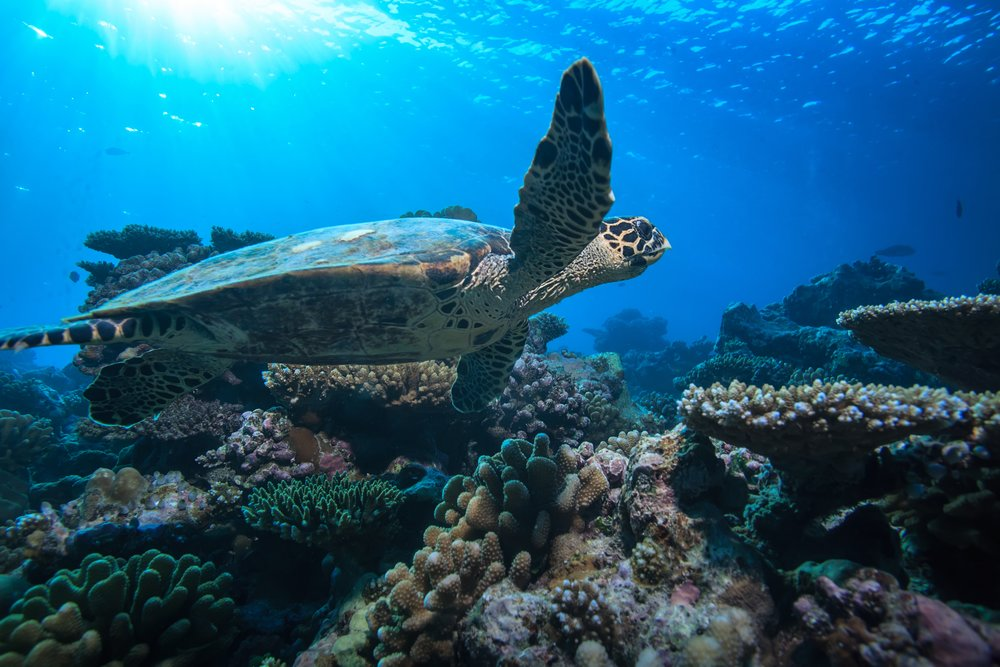 Sea Turtle Nesting Season: 5 Fun Facts