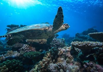 Sea Turtle Nesting Season: 5 Fun Facts