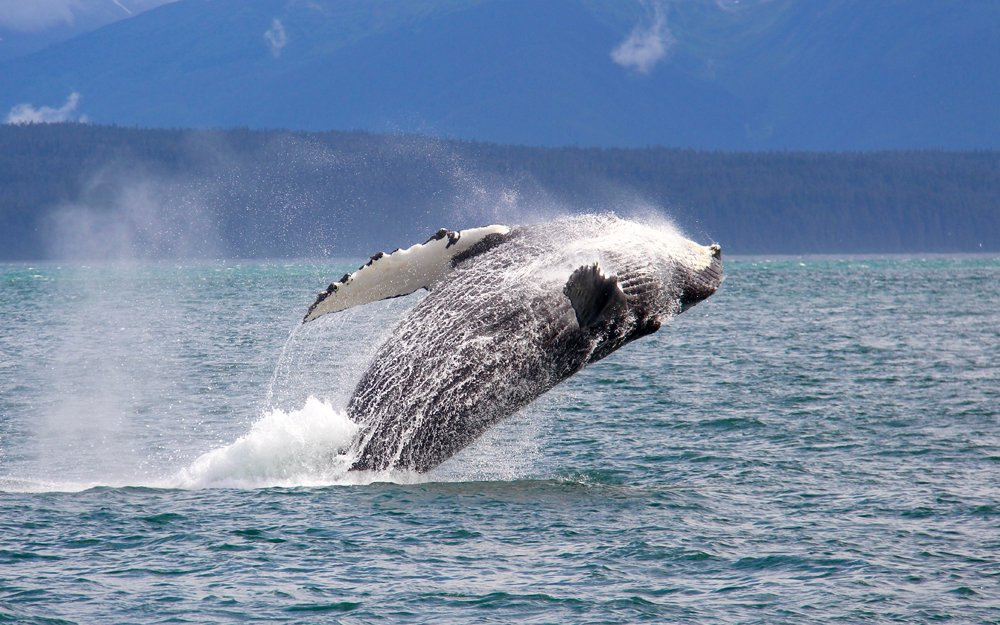 Whale Watching: Tips for an Unforgettable Adventure