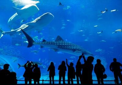 Aquariums in History