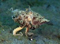 5 Incognito Animals of the Sea