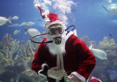 Underwater Christmas Trees and Other Holiday Highlights
