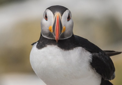 Puffins, Penguins and Polar Bears—Oh My!