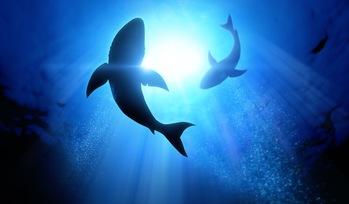Getting to Know Ukupanipo: Hawaii's Shark God